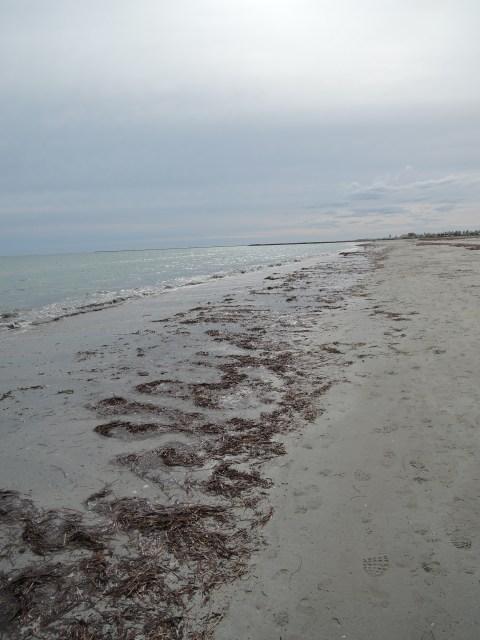 Low tide, grey skies