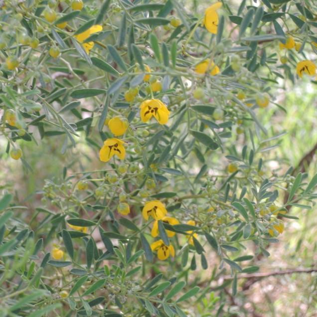 May 2015: the punty bush