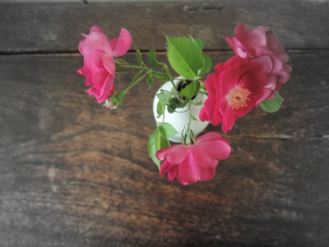 Roses from the bush I pulled out in 2007 29 October 2015 12.38 pm