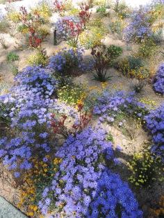 Wildflowers in Kings Park Saturday 22 October 2016