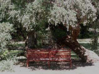 Kings Park: A spot of shade