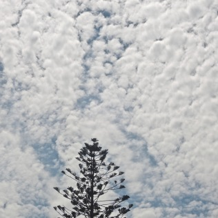 solitary pine beneath the clouds (horizontal)