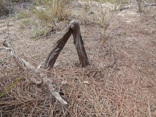 Bent trunk